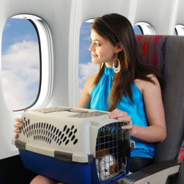 Traveling With Your Dog