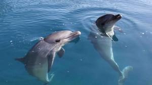 Good guys dolphins