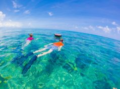 Snorkelling,In,Key,West,-,Florida,Marine,Sanctuary